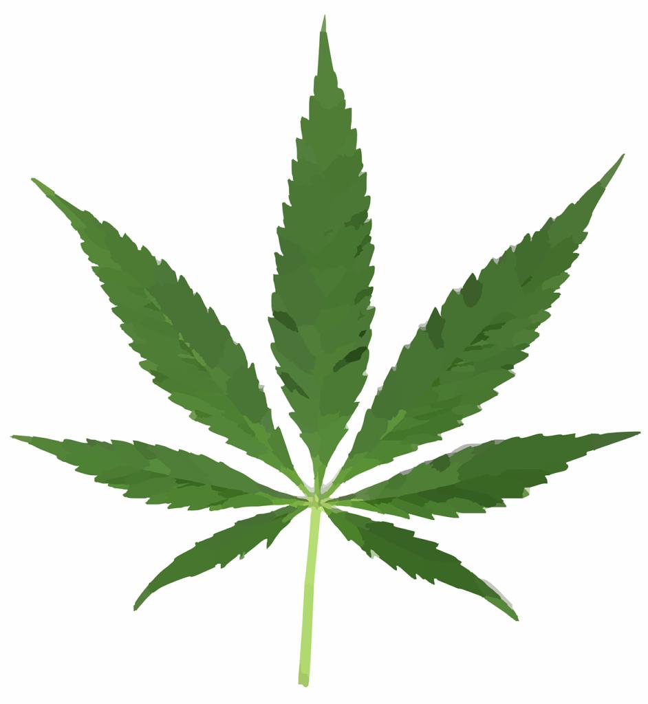 cannabis-297097_1280